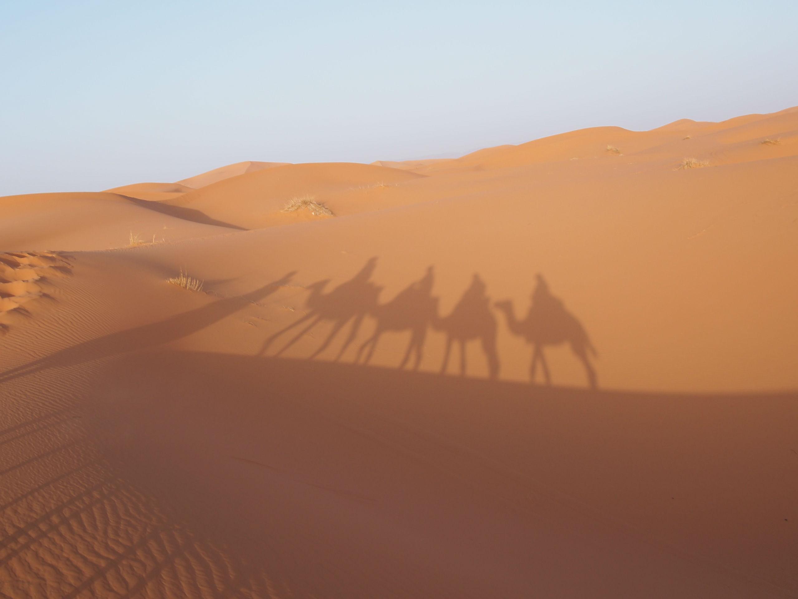 サハラ砂漠とラクダの影