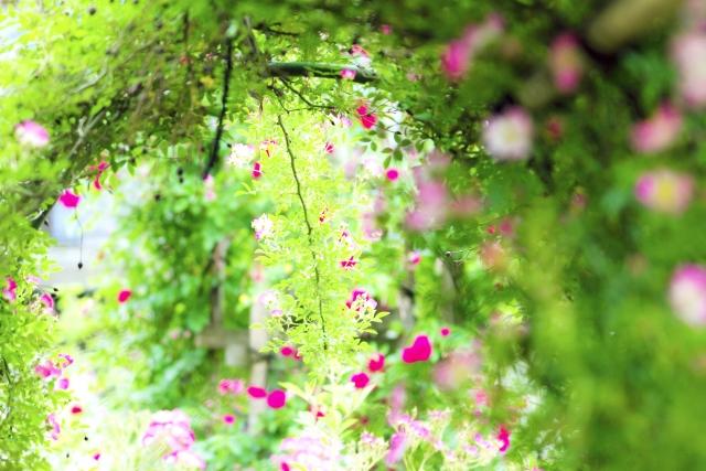 庭園(ターシャ・テューダーさんから学ぶ英語のイメージ画像)