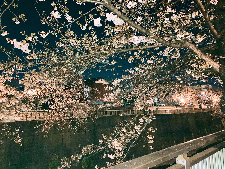 桜が散るや舞うは英語でなんていうの?